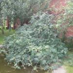 Благоустройство деревьями