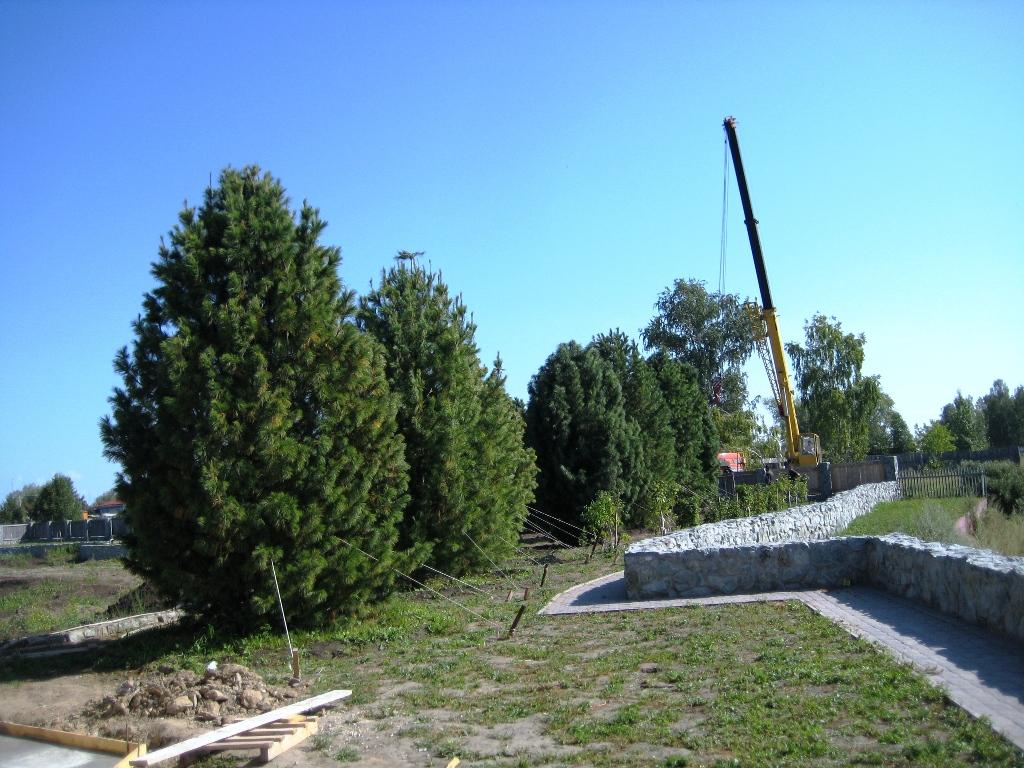 Установка деревьев