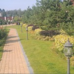 Стрижка садовых деревьев