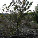 Редкие деревья
