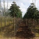 Посадка деревьев - Озеленение